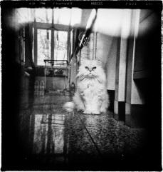 Shyzer Kitty